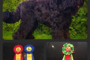GOLDEN GRIFFIN BELLA FANTASIA 3 YEARS (3)