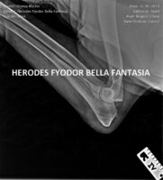 Herodes FYODOR Bella Fantasia HD ED (3)