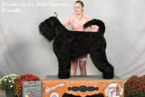 Herodes Fyodor Bella Fantasia, 20 months