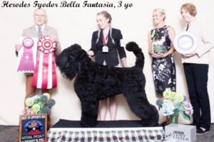 Herodes Fyodor Bella Fantasia 3 years (1)
