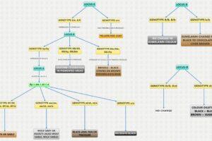 Barve kozuhov shema splet EN_0