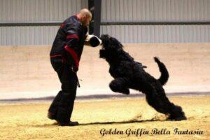 griffin 5 let za delo SPLET (2)